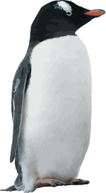 Free Penguin chick vector