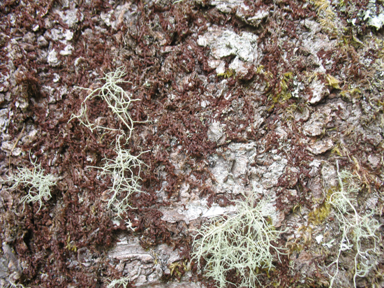 A Free Moss Texture is provided on this page!