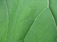 Free Green Plant Leaf Texture