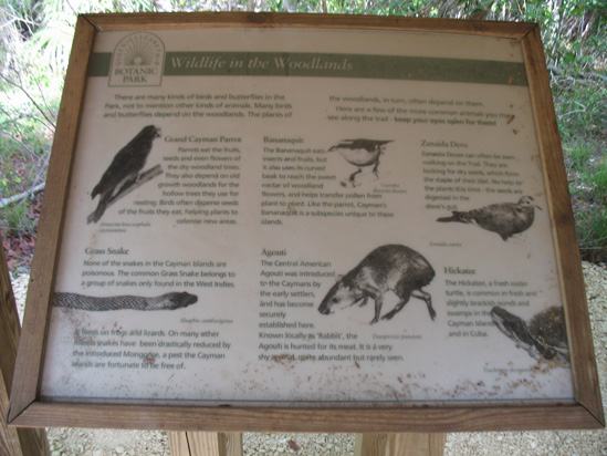 wildlife in the woodlands sign in the trail,Botanic Park cayman picture