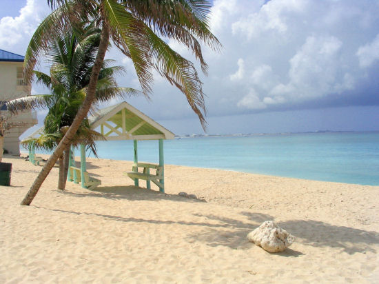 A picture of some palm trees at west bay beach, Grand Cayman.
