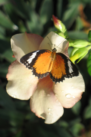 Free Picture of a  Butterfly on a Flower for you to download to your iPhone.
